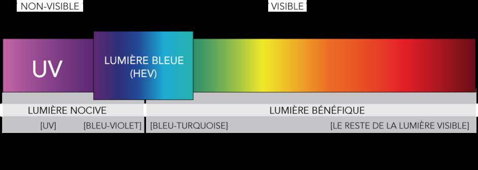 Spectre de la lumière bleue - Blueberry Glasses